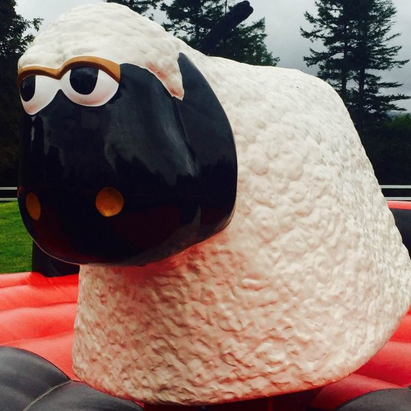 rodeo sheep hire devon